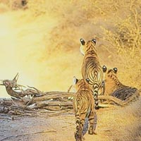 Wild Life with Golden Triangle Tour 7 Days / 6 Nights