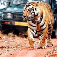 Chittor with Ranthambore Tour