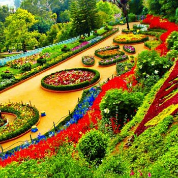 Ooty Tour Packages: 3N/4D