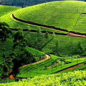 Ooty Kodaikanal Tour Package: 4N/5D
