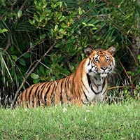 Sundarban 2 Nights and 3 Days Tour