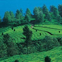 Alluring South India Tour