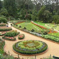 A Vivifying Vacation to Ooty Tour