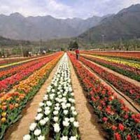 Jammu Delight With Srinagar Tour