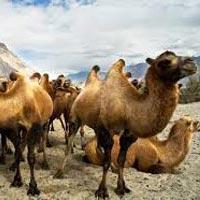 Mystic Ladakh Tour
