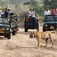 Rajasthan National Park Tour