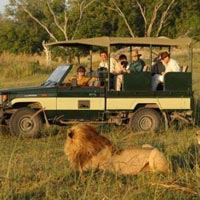 Summer Kenya Safari Tour