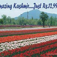 Amazing Kashmir Tour