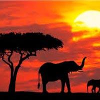 Kenya Touching Heart Tour