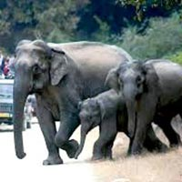 Uttrakhand Wildlife Tour