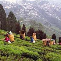 Kolkata - Darjeeling - Gangasagar Excursion Tour