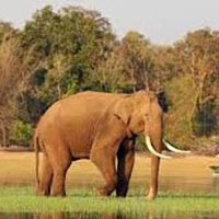Coorg Tour with Kabini