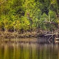 Sundarbans Short Tour