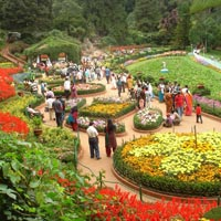Honeymoon In Ooty Package