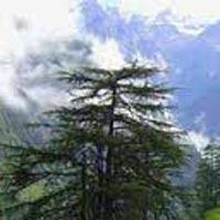 Honeymoon Manali Shimla Tour Package