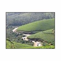Kerala : Cochin - Thekkady - Gavi Tour