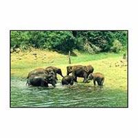 Kerala Wildlife Tours