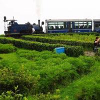 Darjeeling 4 Days / 3 Nights Tour