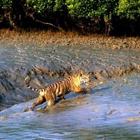 Short Escape to Sundarbans Tour