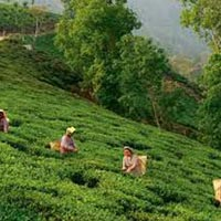 Honeymoon package of Darjeeling - Kalimpong - Gangtok