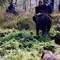 Jungle Tour / Safari Himalayan Dooars -2