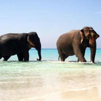 Exotic Andaman Group Vacation Tour