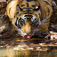 Experience with Tiger Tour