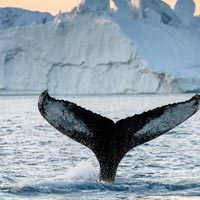 Icefjord Adventure Tour