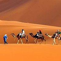 Dubai Free and Easy Tour