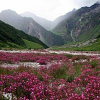 Majestic Valley of Flowers & Hemkund Sahib with Badrinath & Auli Tour