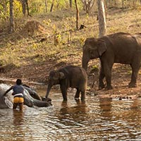 Satpura National Park Jungle Safari Tour