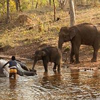 Satpura National Park Jungle Safari Tour
