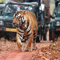 Ranthambore Wildlife Tour