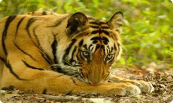 8 Days Delhi–Agra–Ranthombore–Jaipur–Chittaugarh–Udaipur–Delhi Tour