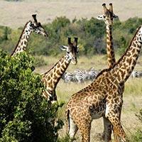 Amazing Kenya Wildlife Tour