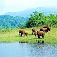 Thekkady Getaway with Sterling 6D/5N Tour