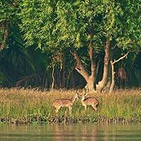 Kolkata Shantiniketan and Sundarban forest Tour