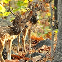 Sundarban Forest safari with Kolkata city Tour