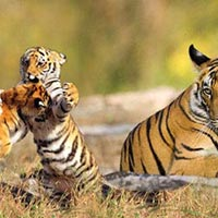 Kolkata & Sundarban tour with Gangasagar Yatra Package