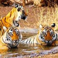 Wildlife Ranthambore Tour