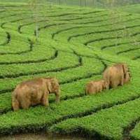 Exotic Kerala Trip Package
