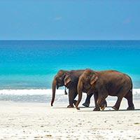 Andaman Cheap Tour Package