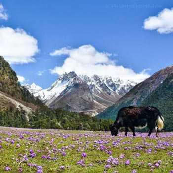 North Sikkim Tour