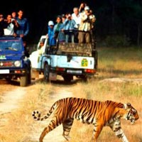 Escape with Tigers of Ranthambore