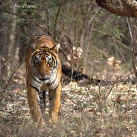 Ranthambore Special Tour
