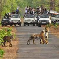 Tadoba Tiger Watching Break Tour