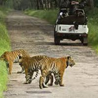3 Days Tiger Safari in Tadoba