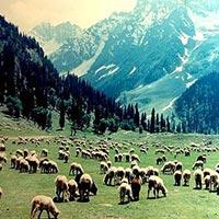 Stunning Kashmir Tour