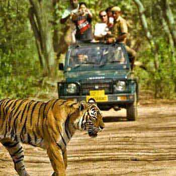 Short Tour To Bandhavgarh