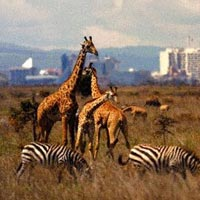 4 Days Amboseli, Tsavo East, West Tour